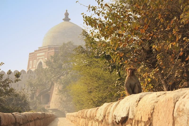 Heritage walking tour in New Delhi: Tughlaqabad Fort